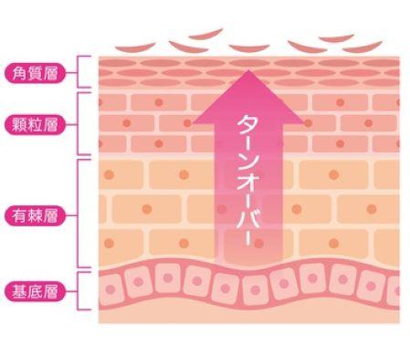 お肌のターンオーバーを促進させるイメージ図