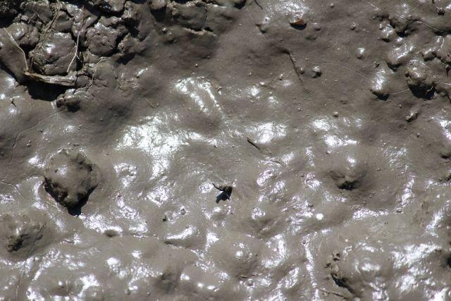 クレイ(泥)の写真