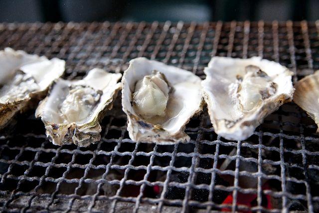 牡蠣が一覧で並んでいる写真