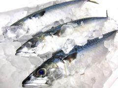 青魚の写真