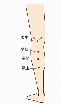 委中(いちゅう)、承筋(しょうきん)、承間(しょうかん)承山(しょうざん)の位置を説明する画像
